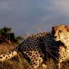 Venez découvrez le Kenya et la Tanzanie !
