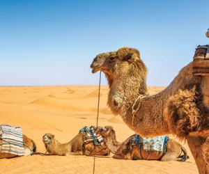 Tarifs imbattables pour nos séjours en Tunisie !