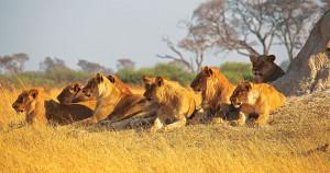 Combine-Kenya-&-Tanzanie-3