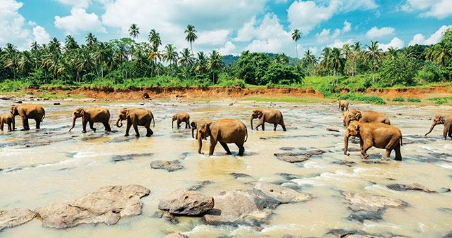 Merveilles-du-Sri-Lanka-2