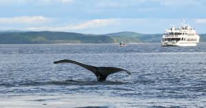 Baleines-Express-1